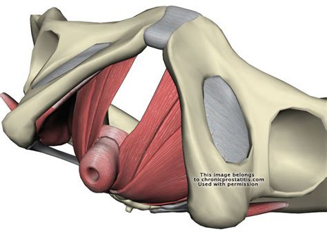 skea smart kegel exercise aid by linkcube studio