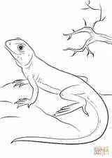 Lizard Coloring Lizards Pages Printable Lagarto Super Reptiles Drawing Eidechse Basilisk sketch template