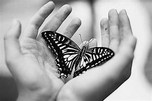 animals, beautiful, beauty, black and white, butterflies ...