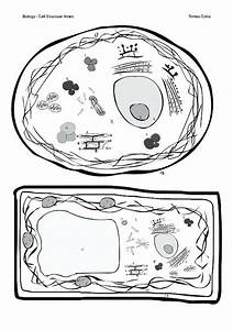 31 Label Animal Cell Diagram