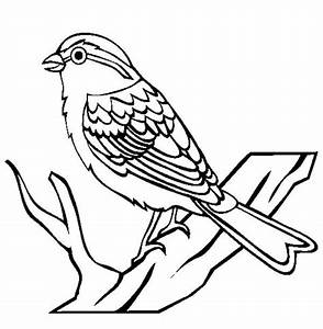 House sparrow coloring page | Coloring Pages for Free