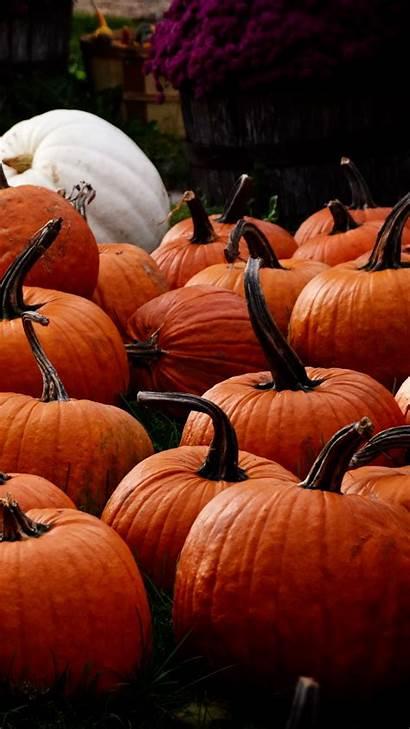 Pumpkin Harvest Autumn Iphone Background 6s Parallax