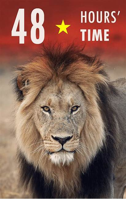 Lions Vietnam Tell Lion Secure Bones Stop