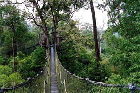 sensasi wisata hutan  bukit bangkirai tempat wisata
