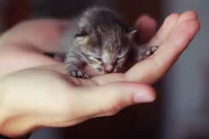 tiny cats 12 kitten chrome themes desktop wallpapers more for