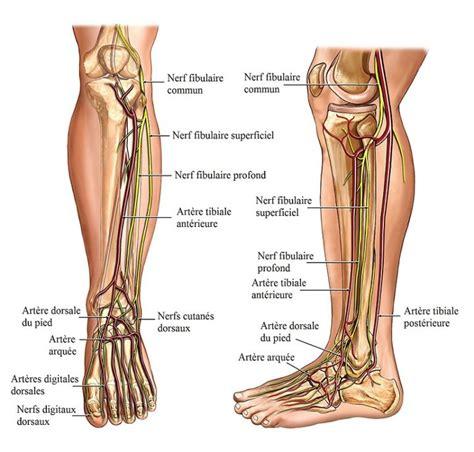 douleur aux nerf du pied pathologies nerveuses qui provoquent des douleurs aux pieds page 2