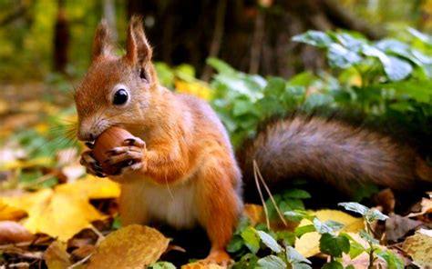 Squirrel Wallpapers Images Photos Pictures Backgrounds