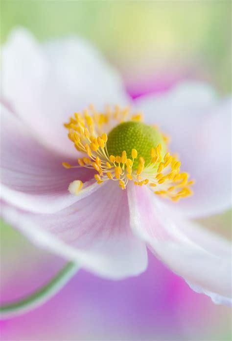 beautiful floral photography  mandy disher clickscom