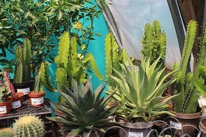 Tropical Plants Place Garden Tropicals