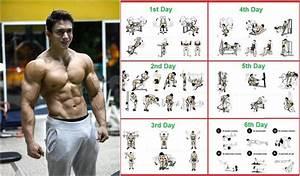 8 Week Bodybuilding Workout Plan  U2013 Eoua Blog
