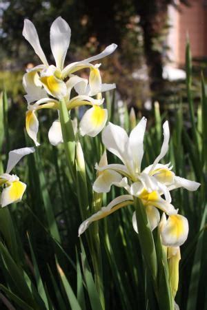 fiori di san giuseppe giardino curato con bellissimi fiori e nomi delle piante
