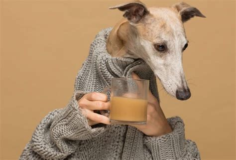 """Coffee is something that is easily accessible, and that means that it may also be within easy reach for a curious canine or other family pet. What Is """"Coffee For Dogs""""? """"Rooffee"""" Is Already Concerning ..."""