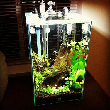 Fluval Chi Aquascape by Fluval Chi Set Up Source Fluval Page