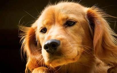 Desktop Puppies Puppy Dogs Wallpapers Backgrounds Computer