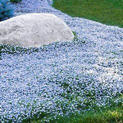 Winterharte Stauden Kaufen : bodendecker stauden inspiration f r den garten garten stauden und winterhart ~ Orissabook.com Haus und Dekorationen