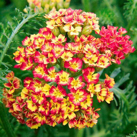Sommerblumen Mehrjährig Winterhart by Sommerbl 252 Garten Vertrieb Garten Vertrieb Alles F 252 R