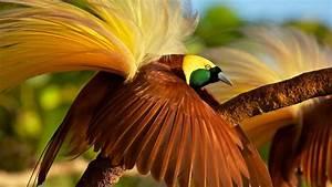 Wallpaper bird of paradise, bird, 4k, Animals #15002  Bird