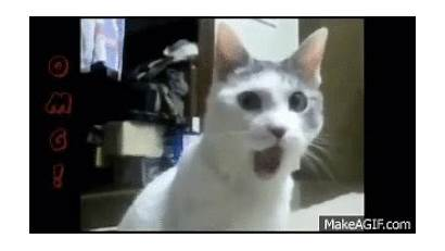 Funny Cats Giphy Gifs