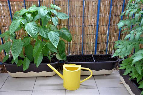 Balkon Gemüse Pflanzen by Gem 252 Se Das Sich Im K 252 Bel Lohnt R 252 Ben