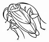 Cockroach Coloring Pages Printable Bestcoloringpagesforkids Results sketch template