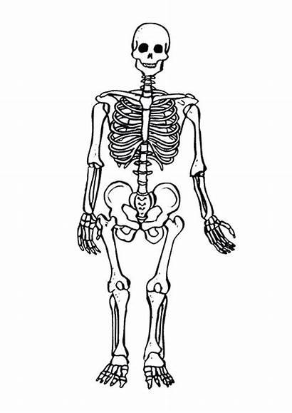 Skeletal System Coloring Pages Skeleton Printable Getcolorings