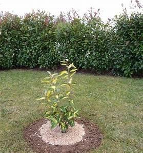 Arbuste Plein Soleil Longue Floraison : quel arbuste en plein soleil au jardin forum de jardinage ~ Premium-room.com Idées de Décoration