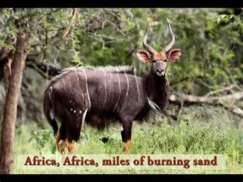 africa song  kids meet african animals youtube