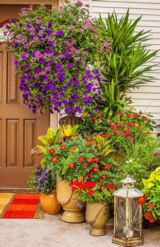 container gardens  pizzazz midwest living