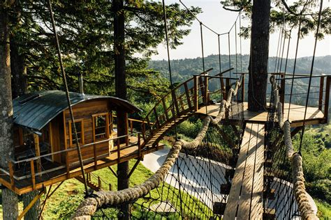 guy quits  job  build  cool tree house     king