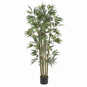 Bambus Pflegen Zimmer : zimmerbambus kaufen was muss man davor wissen und beachten ~ Lizthompson.info Haus und Dekorationen