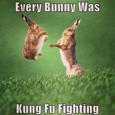 Everybunny Was Kung Fu Fighting Pictures, Photos, and
