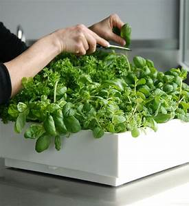 Vertikaler Garten Kaufen : pflanzenwand karoo wei im greenbop online shop kaufen ~ Lizthompson.info Haus und Dekorationen