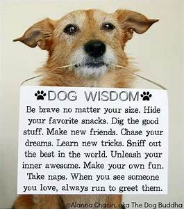 Cute Dogs Images With Quotes | Wallpaper sportstle