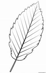 Leaf Alder Coloring Printable sketch template
