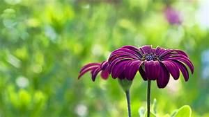 Purple Flower Wallpapers Hd 11 High Resolution Wallpaper ...