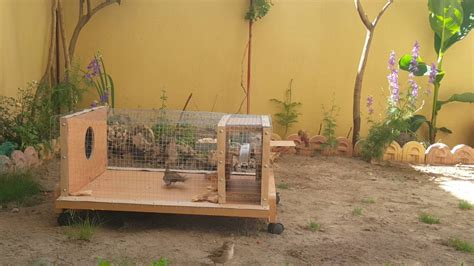 homemade sparrow trap  catch  kind  birds part  youtube