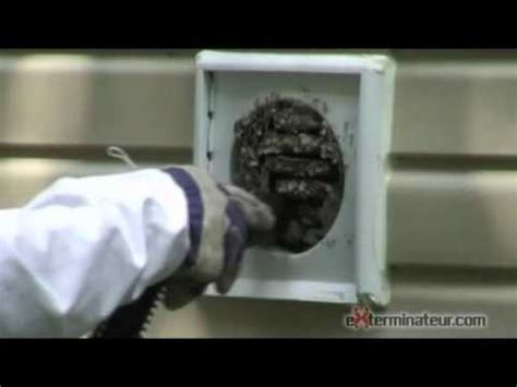 wasps  home vent youtube