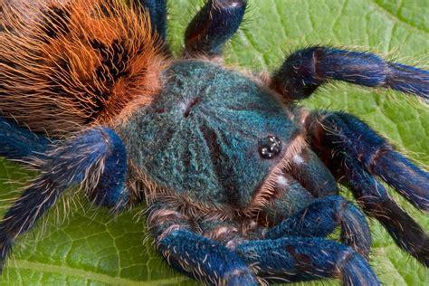 beginners guide  feeding tarantulas keeping exotic
