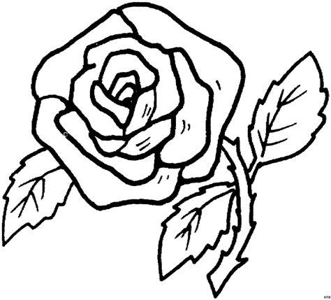 prachtvolle rose ausmalbild malvorlage blumen