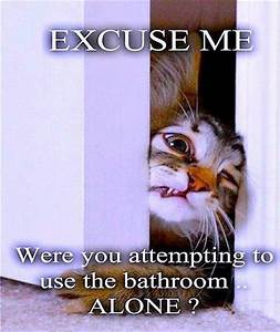 Funny cat wants to go to the bathroom with you dump a day for Where do newborn kittens go to the bathroom