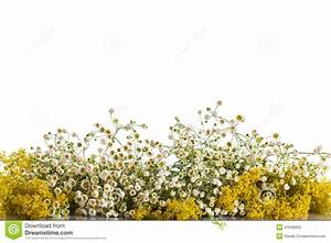 Summer Bouquet Of Wild Flowers Stock Photo - Image of ...