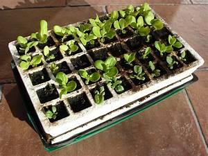 Planter Graine Tomate : semis d 39 int rieur 9 questions que vous m 39 avez pos es ~ Dallasstarsshop.com Idées de Décoration