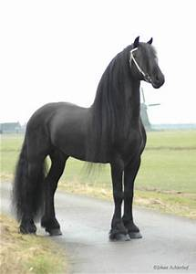 Top 20 Most Beautiful Horses In The World | Pouted Online ...