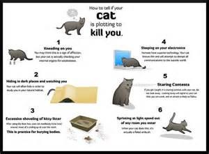 cat behaviors predator cats