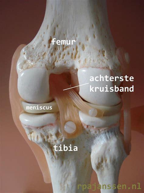 herstel kijkoperatie knie kraakbeen