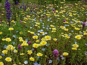 Save The Bees By Starting Wildflowers From Seed