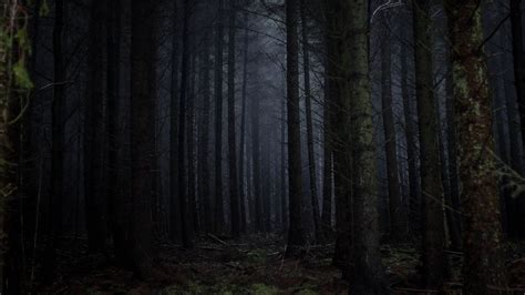 Here you can find the best android dark wallpapers uploaded by our community. Download wallpaper 2560x1440 forest, fog, dark, trees, gloomy widescreen 16:9 hd background