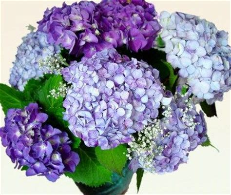 How To Revive Roses In A Vase - keep your cut hydrangea blooms from wilting in the vase