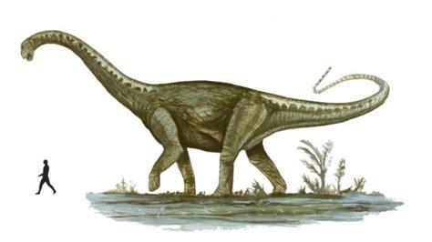 informacion imagenes de dinosaurios  dibujos  colorear  imprimir informacion imagenes