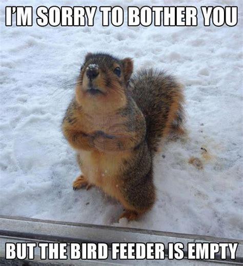 Memes Funny Animals - wild animal memes image memes at relatably com